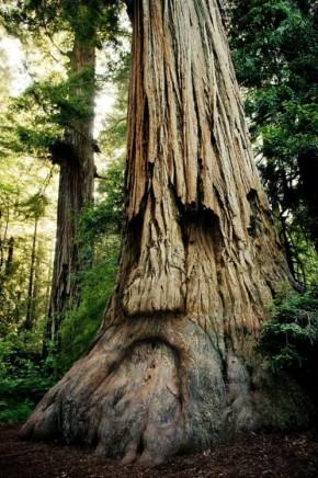 Tree Wisdom – on HumanNature